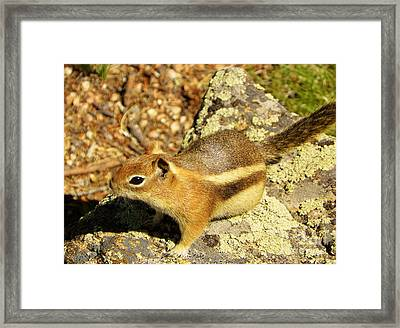 Ready To Run Framed Print by Michelle Bentham