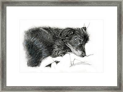 Ready To Sleep Framed Print by Penny Collins