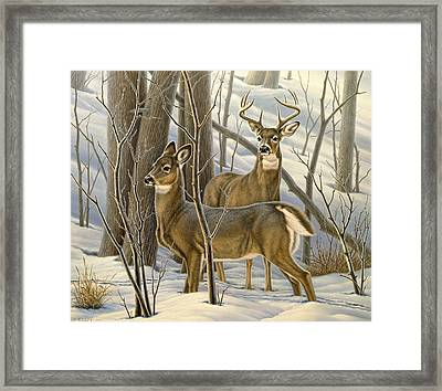 Ready - Whitetail Deer Framed Print by Paul Krapf