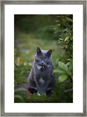Really Now Framed Print by Mike Reid