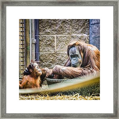 Really Tough Love Framed Print