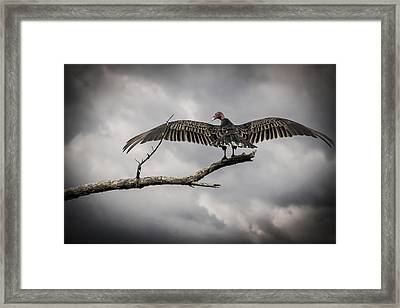 Reaper Awaits Framed Print by Bradley Clay