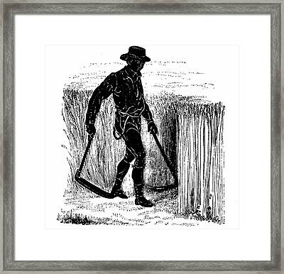 Reaping With A Hainault Scythe Framed Print by Universal History Archive/uig