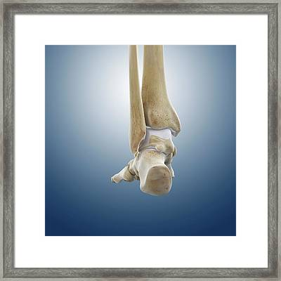 Rear Foot And Ankle Bones Framed Print by Springer Medizin