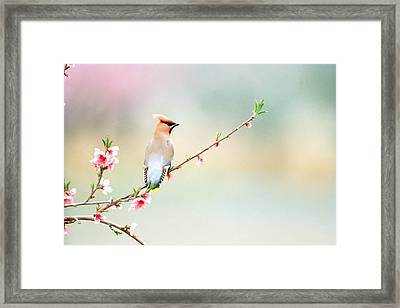 Rear View Of Bird Perching On Branch Framed Print by Panoramic Images
