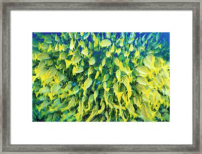 Rear View Of Blue-striped Snapper Framed Print