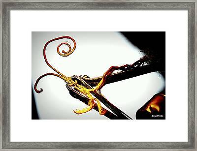 Rebel Cutting Ties Framed Print by Jonathon Sitton