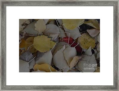 Rebel Heart Framed Print by Brian Boyle