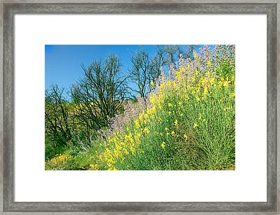 Framed Print featuring the photograph Rebirth After Wildfires - San Gabriel Mountains California by Ram Vasudev