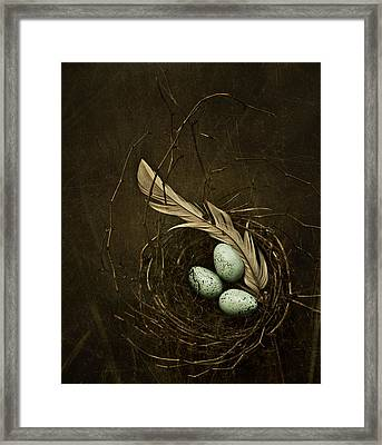 Rebirth Framed Print by Amy Weiss