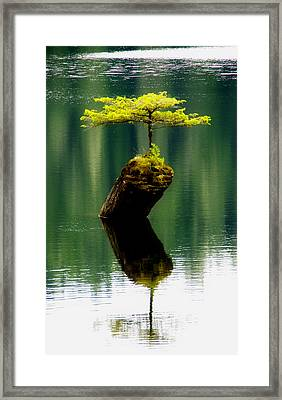 Rebirth  Framed Print