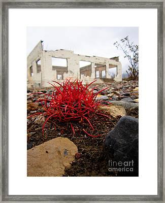 Reclaimed Framed Print by Dan Julien