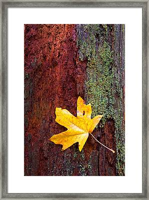 Reclamation Framed Print by Mike  Dawson