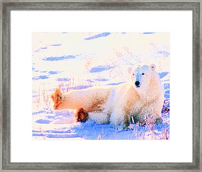 Reclining Polar Bear Framed Print