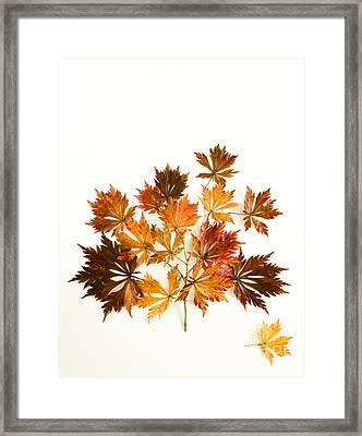 Reconstructed Full Moon Maple Framed Print