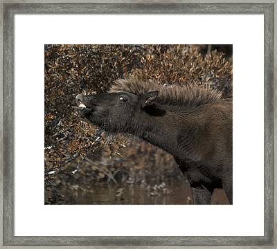 Recording A Scent Framed Print by Betsy Knapp