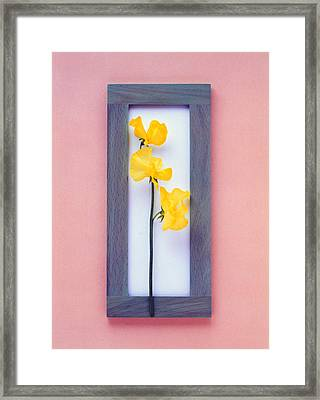 Rectangular Purple Frame With Yellow Framed Print by Panoramic Images