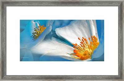 Recuerdos De La Primavera Framed Print