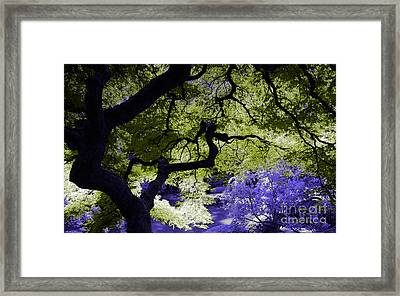 Recurring Dreams Of Color Framed Print by Marvin Blaine