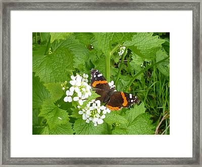 Framed Print featuring the photograph Red Admiral Butterfly by Lingfai Leung