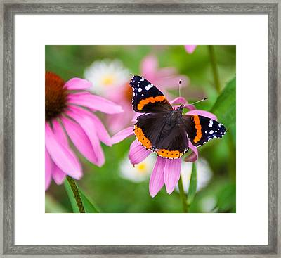 Framed Print featuring the photograph Red Admiral Butterfly by Patti Deters