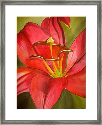 Red Alert Lily Framed Print by Sacha Grossel