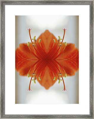 Red Amaryllis Flower Framed Print