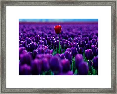 Red Amidst Purple Framed Print by Benjamin Yeager