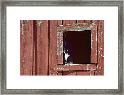 Red And Black And White Framed Print