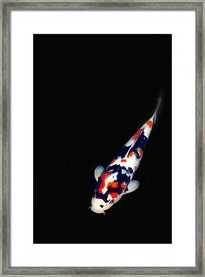 Red And Black Koi 2 Framed Print