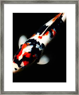 Red And Black Kois Framed Print