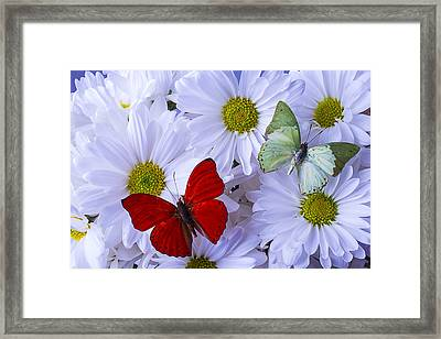 Red And Green Butterflies Framed Print