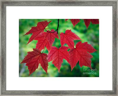 Red And Green Framed Print by Inge Johnsson