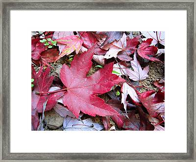 Red And Green Of Fall Framed Print