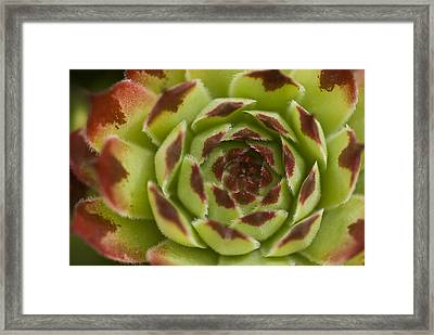 Framed Print featuring the photograph Red And Green by Trevor Chriss
