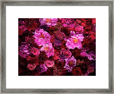 Red And Pink Cut Flowers, Close Up Framed Print