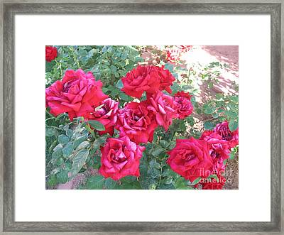 Red And Pink Roses Framed Print by Chrisann Ellis