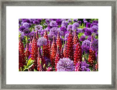 Red And Purple #2 Framed Print by Gerry Walden