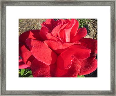 Red And Wet Framed Print by Zina Stromberg