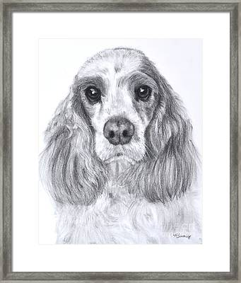 Red And White Cocker Spaniel Framed Print by Kate Sumners