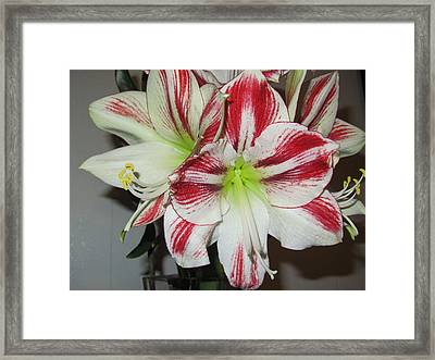 Red And White Love Beauty Framed Print by Stephanie Francis