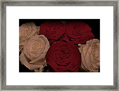 Red And White Roses Color Engraved Framed Print by David Dehner