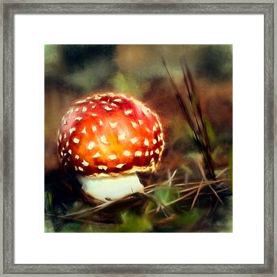 Red And Whitetoadstool Framed Print