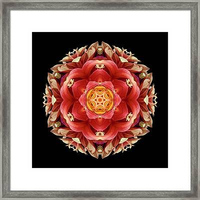 Red And Yellow Dahlia IIi Flower Mandala Framed Print by David J Bookbinder