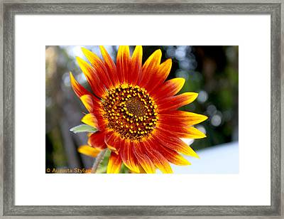 Red And Yellow Flower Framed Print by Augusta Stylianou