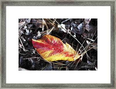 Red And Yellow Framed Print by John Rizzuto