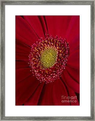 Red And Yellow Framed Print by Mitch Shindelbower