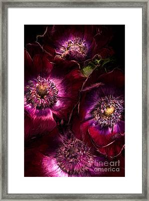 Red Anemones A Digital Painting Framed Print