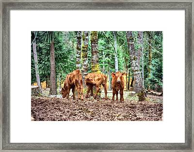 Framed Print featuring the pyrography Red Angus Calves by Larry Campbell