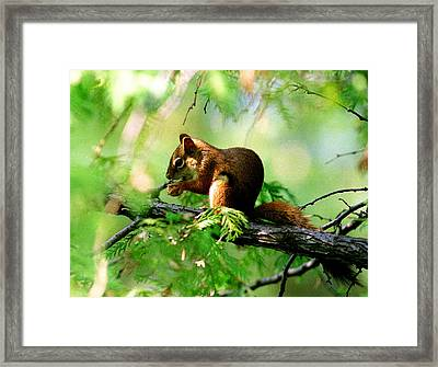 Red Aquirrel Framed Print